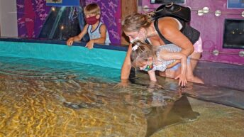 """Maritime Aquarium's """"Gratitude Days"""" Nov. 23-25 makes free tickets available to broad list of essential workers"""