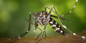 Norwalk Health Department's Mosquito Management Program Fights Mosquito-borne Disease